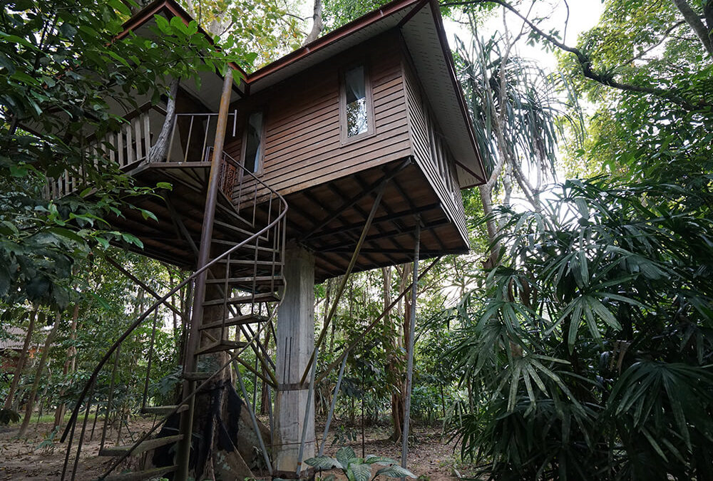 Lofty Home Goals: Treehouses Build on Sustainability