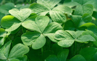 Go Green, Save Green and Grow a Greener Lawn with Clover