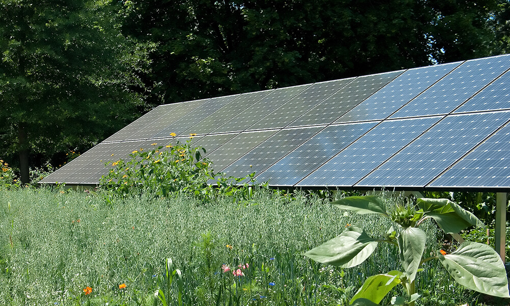 a backyard array of solar panels